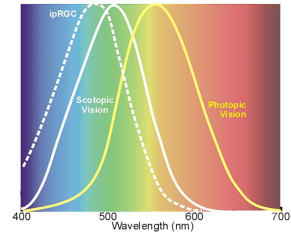 Retina Spectrum