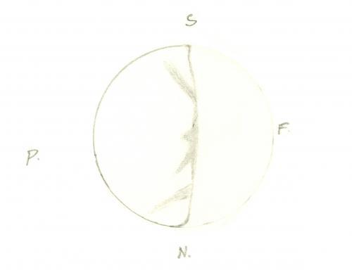 Venus 196012101850
