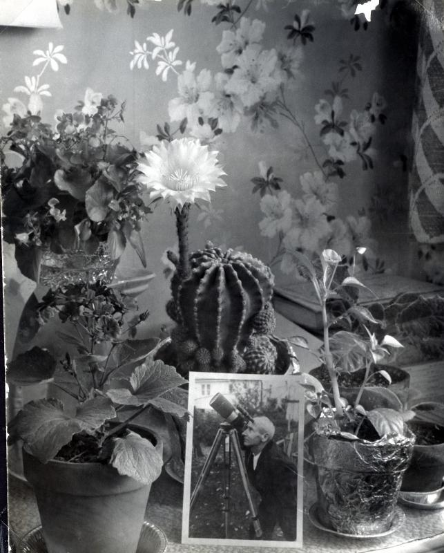 Bert's Flowers