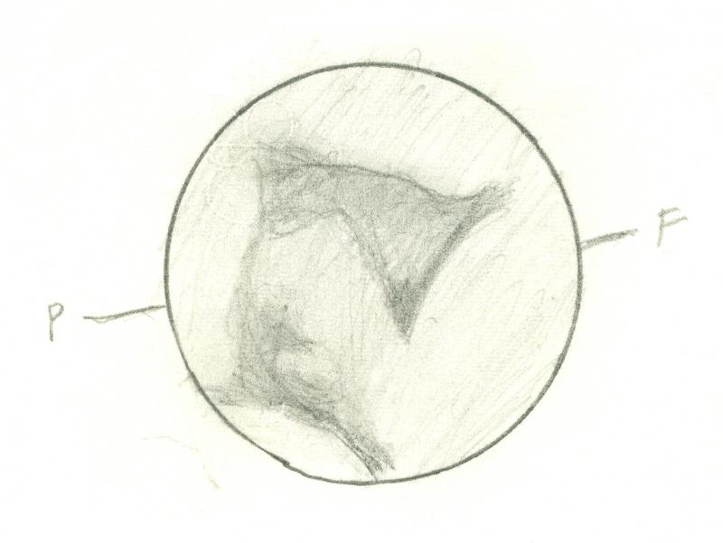 Mars 196101050410